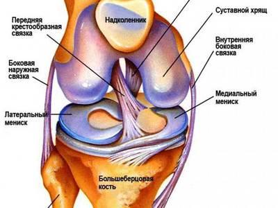 Если порваны связки в колене долго ли они срастаются