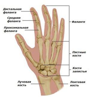 Почему могут болеть суставы - анатомия кисти руки