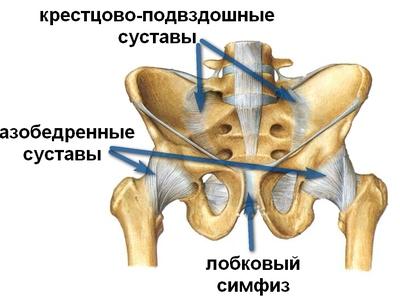 Болят тазобедренные суставы у женщины причины и лечение