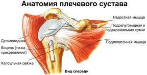 Плексит плечевого сплетения: что это такое, симптомы и лечение ...