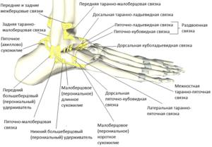 При ходьбе болит голеностопный сустав болят суставы что дел