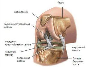 Внутренний мениск коленного сустава ахиллов сустав
